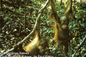 grandes-primatas