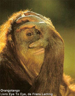 orangotango-missao
