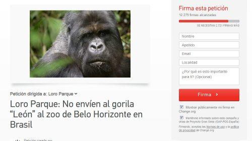 Petição gorila Leon