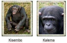 Kisembo & Kalema