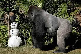 gorila no zoo de los Angeles