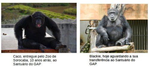 Caco e Blackie