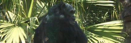Zoo San Juan Aragon MX (11)