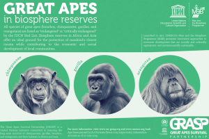 great apes biosphere