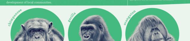 great apes biosphere