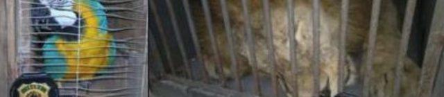 animais em zoos ou circos