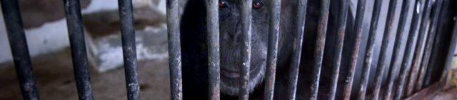 Chimp Mendoza Los Andes