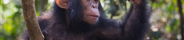 apes_science