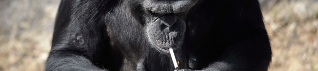 chimpfumo
