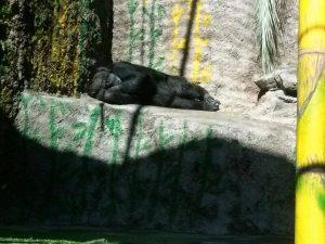cecilia-zoo-mendoza