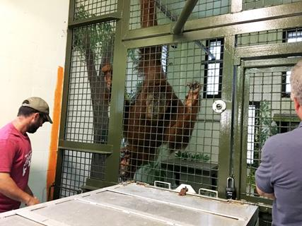 Even chimps want to see Justice served - GAP Project